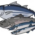 魚がいっぱい届いた!!冷凍保存方法、期間。長持ちする冷凍方法は?
